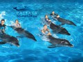 pattaya-dolphinarium-small-1