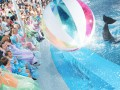 pattaya-dolphinarium-small-2
